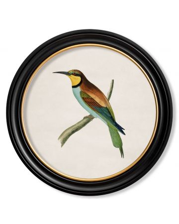 Bee Eater Print Large
