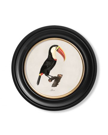 Toucan 2 Print - Small