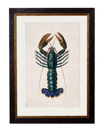 Crayfish Print Large
