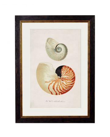 Nautilus Print - Small