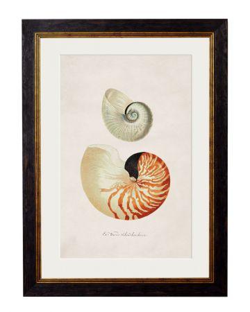Nautilus Print - Large