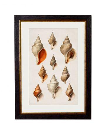 Conch Shells Print - Small