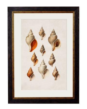Conch Shells Print - Large