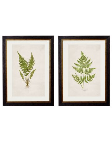 Fern Set of 2 Prints
