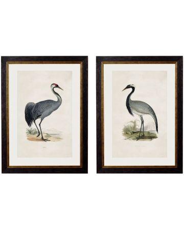 British Cranes Set of 2 Prints