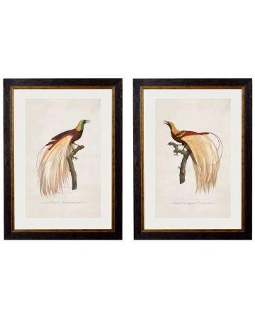 Birds of Paradise Set of 2 Prints