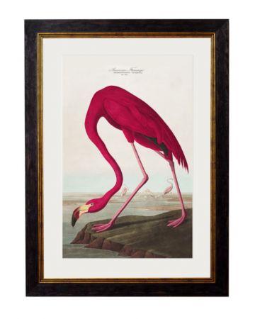 Audubon's American Flamingo Print - Small