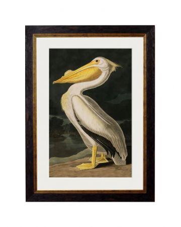 Audubon's American White Pelican - Small