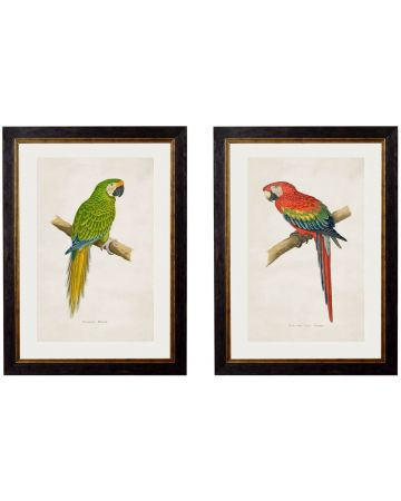 Macaw Parrot Set of 2 Prints - Green & Red