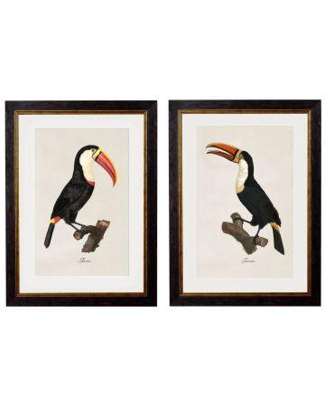 Toucans Set of 2 Prints