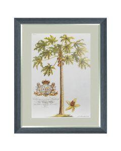 Papaya Tree - Georg Dionysius Ehret