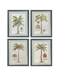 Georg Dionysius Ehret - Set of 4 Tropical Tree Prints