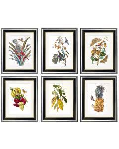 Maria Sibylla Merian - Set of 6 Botanical Prints