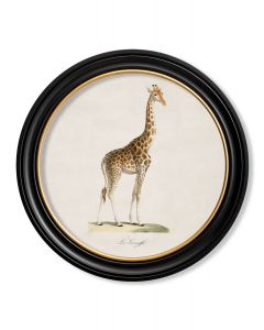 Round Giraffe print - 70cm