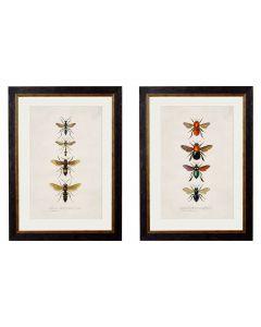 Entomology, bees/wasps set