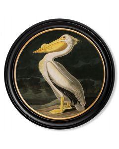 C.1838 Large Round Pelican