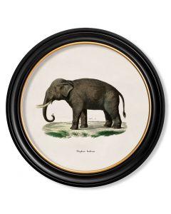 C.1846 Large Round Elephant