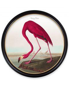 C.1838 XL Round Flamingo