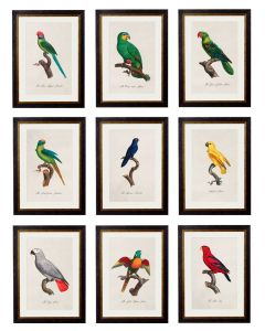 C.1800'S Collection of Parrots - Set of 9