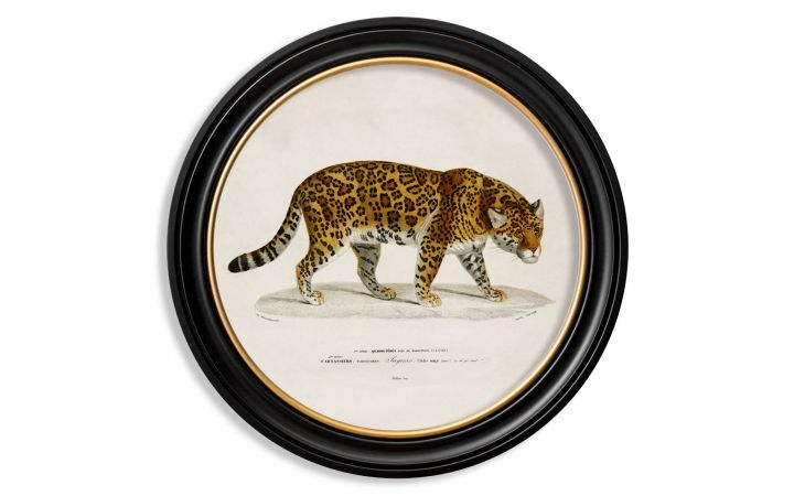 C.1836 Large Round Jaguar