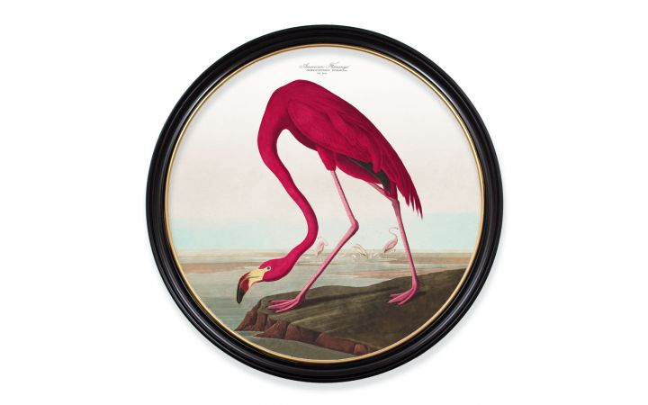 C.1838 XL Round Flamingo