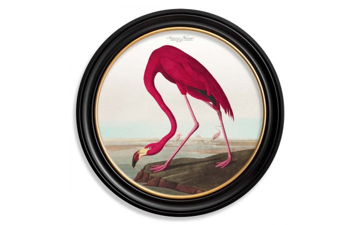 C.1838 Large Round Flamingo