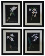 Orchid on Slate Set of 4 Prints